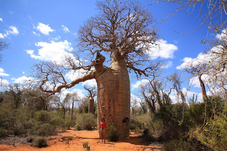 Baobabs en Mangily, con Carla.