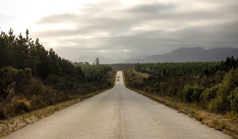 Ruta Jardin (Garden Route), Tsitsikamma Forest, Sudáfrica.